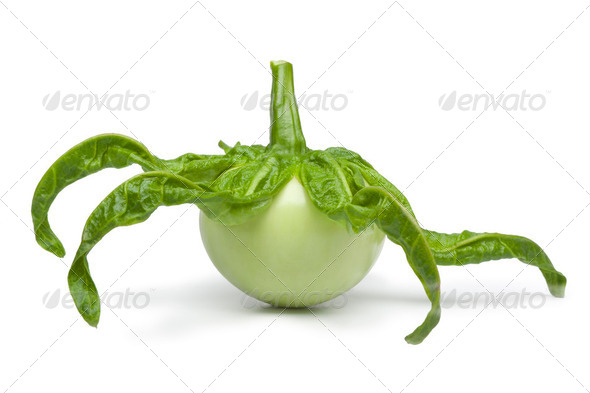 African eggplant - Stock Photo - Images