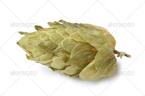 Common Hop flower - Stock Photo - Images