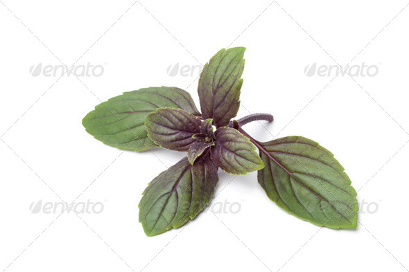 Fresh red basil leaves - Stock Photo - Images