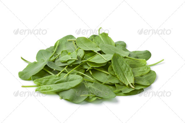 Fresh sorrel leaves - Stock Photo - Images