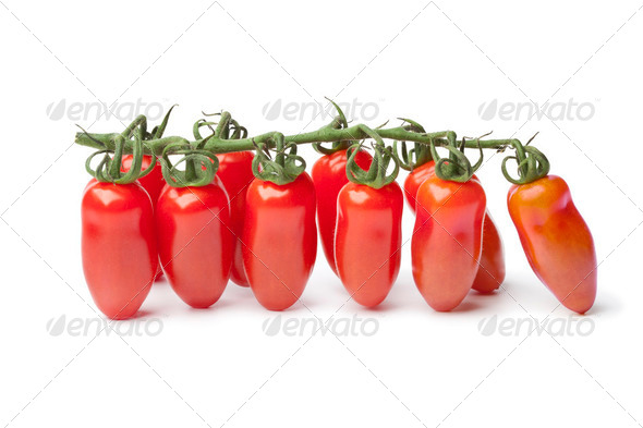 Baby San Marzano's tomatoes on a vine - Stock Photo - Images