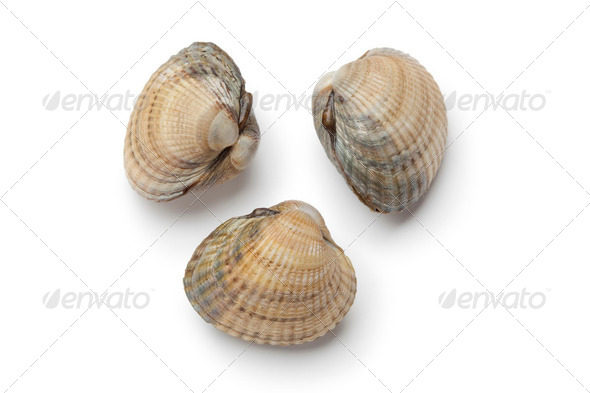Cockles on white background - Stock Photo - Images