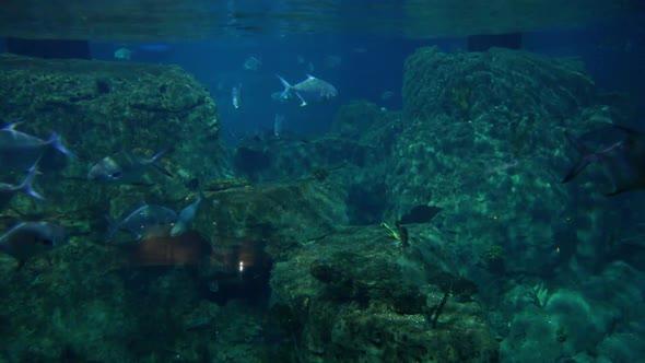 VideoHive Aquarium 10 20402321