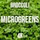 Microgreens Broccoli  4 - VideoHive Item for Sale
