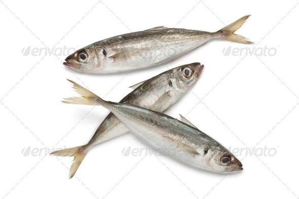 Atlantic horse mackerels - Stock Photo - Images
