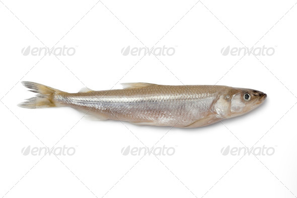 Single fresh European smelt fish - Stock Photo - Images