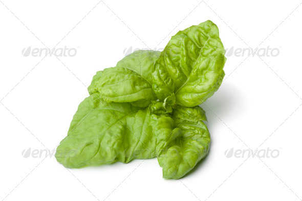 Lettuce leaf basil - Stock Photo - Images