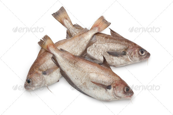 Fresh raw Pout whiting - Stock Photo - Images
