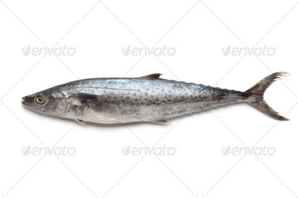 Whole single Kingfish - Stock Photo - Images