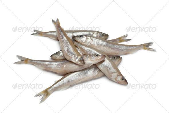 Fresh European smelt fishes - Stock Photo - Images