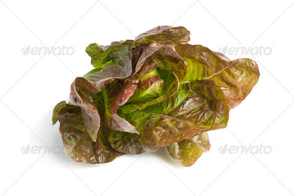 Fresh red Romaine lettuce - Stock Photo - Images