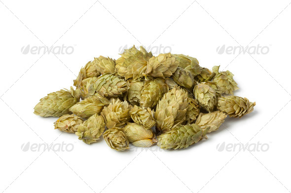 Common Hop flowers - Stock Photo - Images