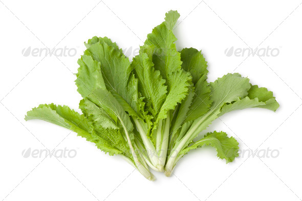 Young Chinese cabbage leaves - Stock Photo - Images