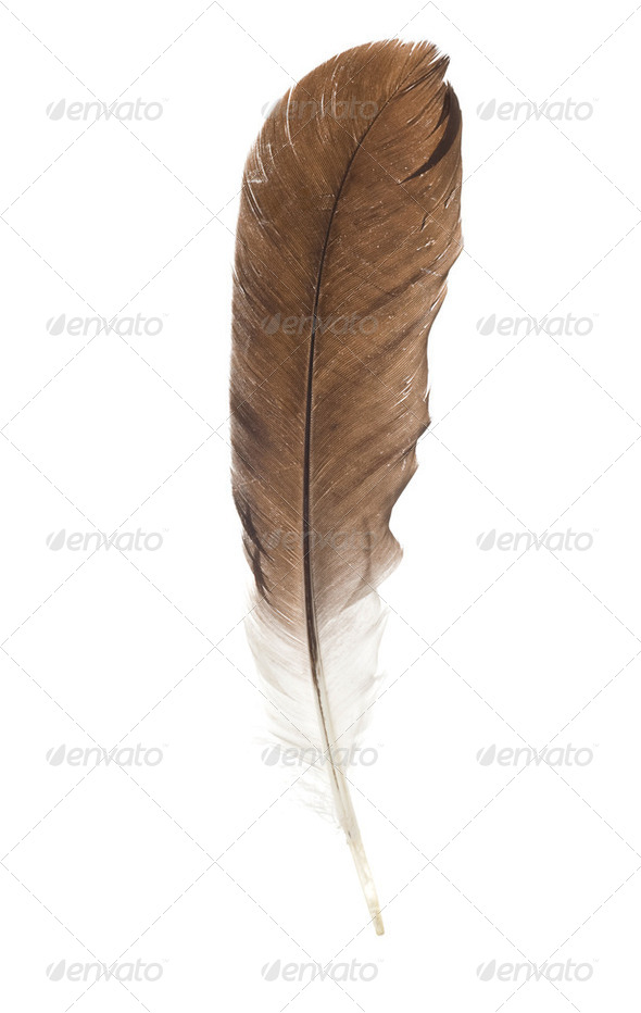 feather pen isolated on white - Stock Photo - Images