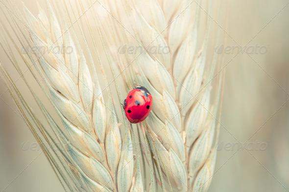 Ladybug on a spike - Stock Photo - Images
