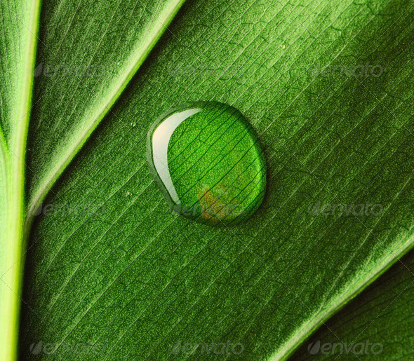 Water drop on leaf - Stock Photo - Images