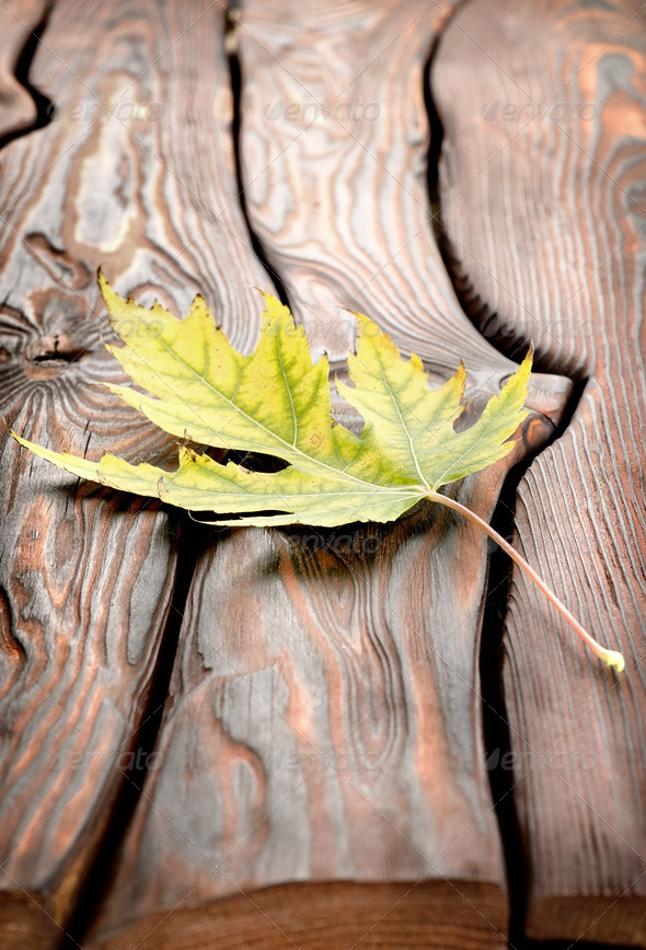 Autumn leaf on a wooden table - Stock Photo - Images