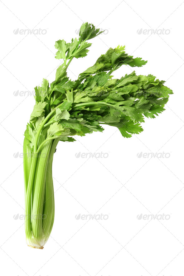 Celery - Stock Photo - Images