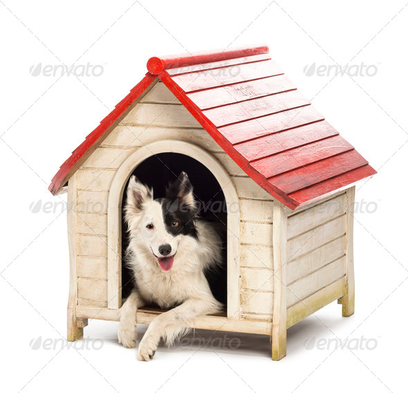 Border Collie in a kennel against white background - Stock Photo - Images