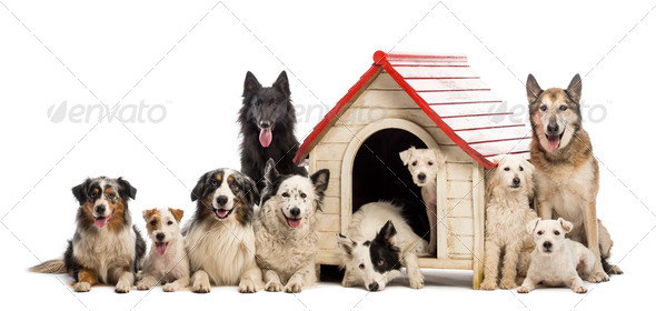 Large group of dogs in and surrounding a kennel against white background - Stock Photo - Images