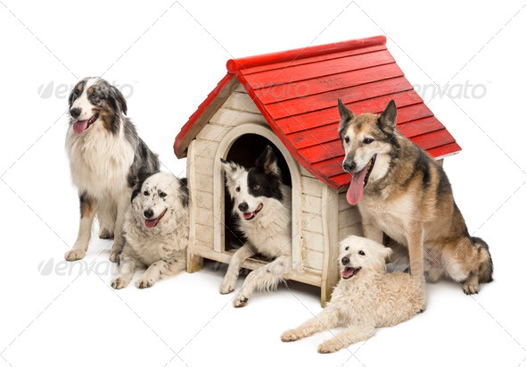 Group of dogs in and surrounding a kennel against white background - Stock Photo - Images