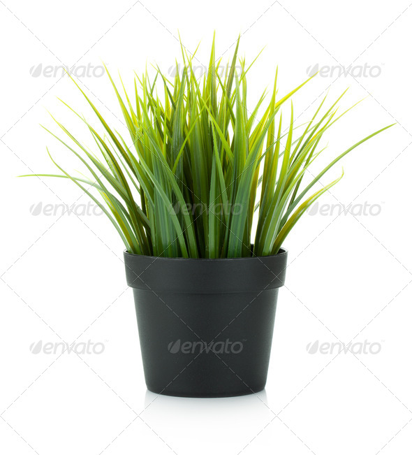 Decorative grass in flowerpot - Stock Photo - Images