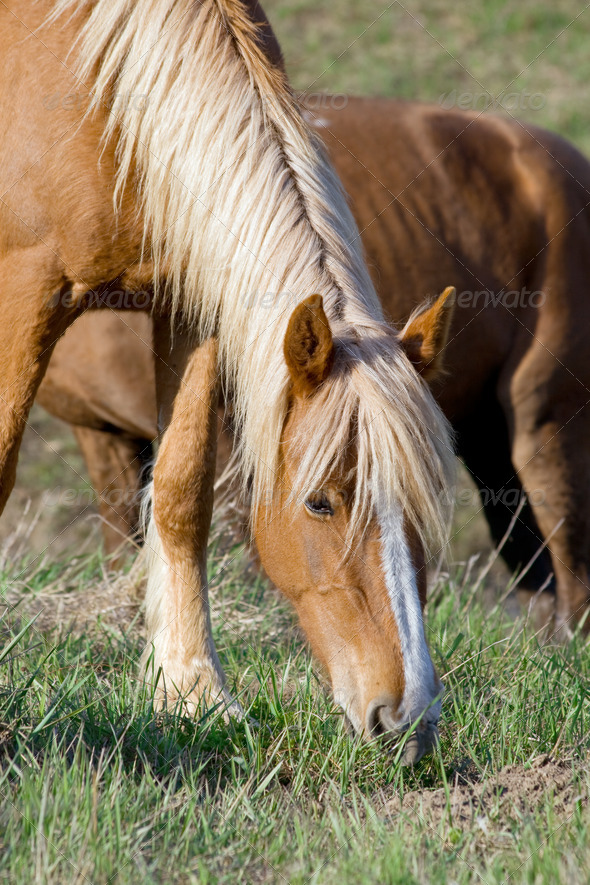 Brown horse - Stock Photo - Images