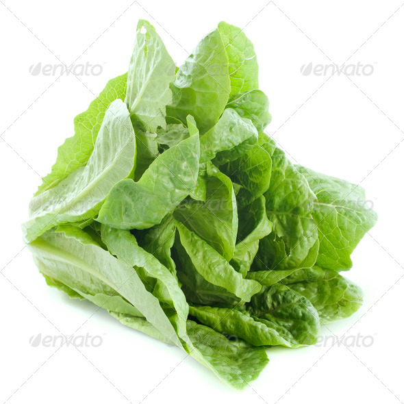 Romaine lettuce - Stock Photo - Images