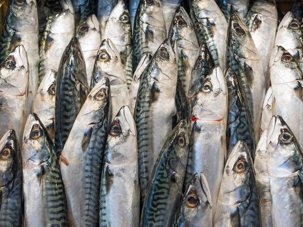 Mackerel Fish at the market - Stock Photo - Images