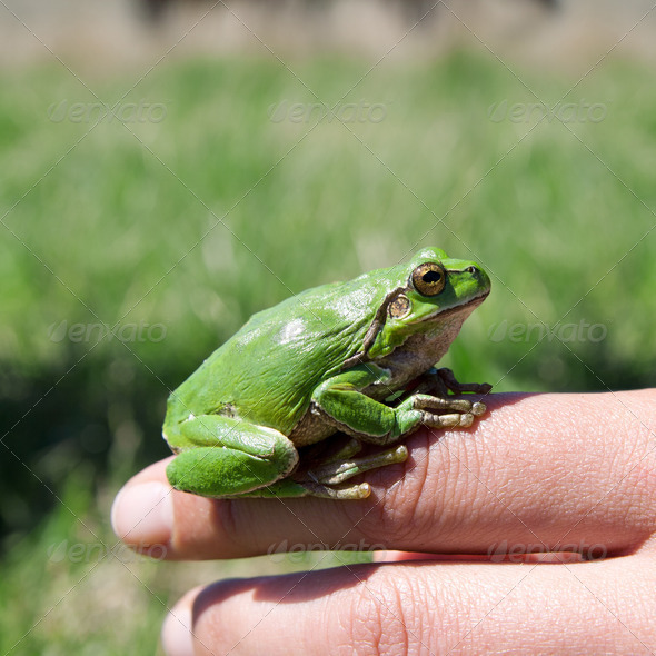 Green frog sitting on a hand - Stock Photo - Images