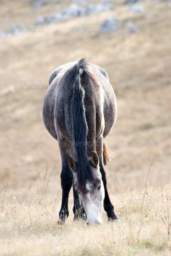 Grey hors - Stock Photo - Images