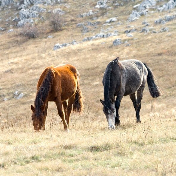 Horses on pasture - Stock Photo - Images