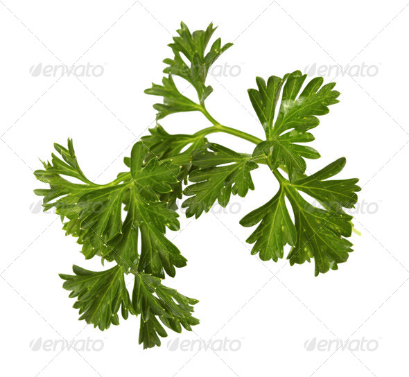 parsley isolated on white background - Stock Photo - Images