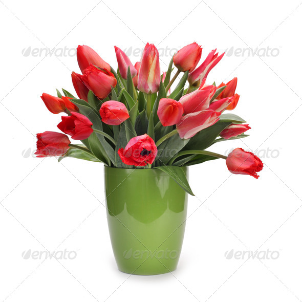 bouquet of tulip flowers - Stock Photo - Images