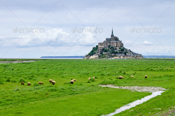 Sheeps grazing near Mont Saint Michel landmark. Normandy, France, Europe. - Stock Photo - Images