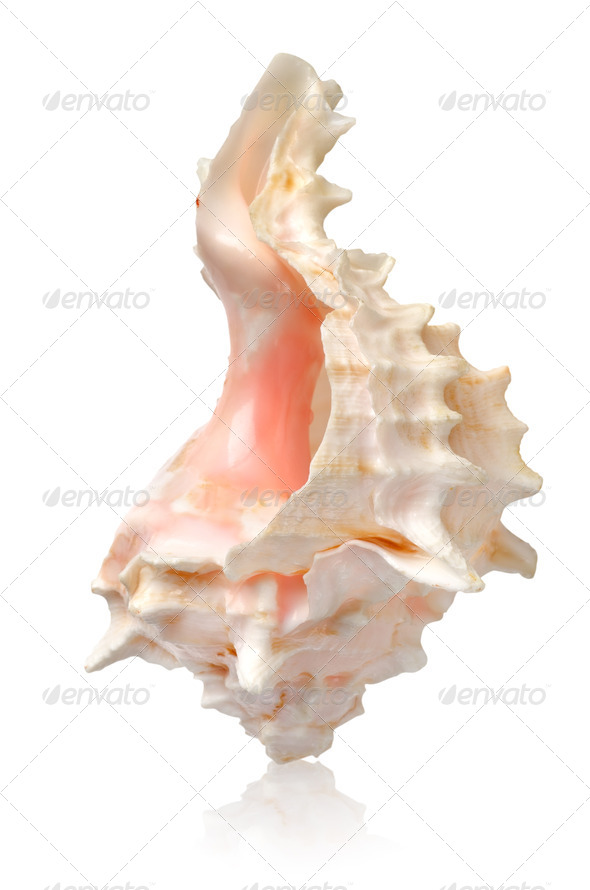 Shell in a vertical position - Stock Photo - Images