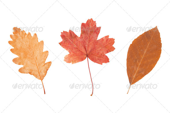 Colorful autumn leaves. - Stock Photo - Images