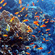 Fish Shoal - VideoHive Item for Sale