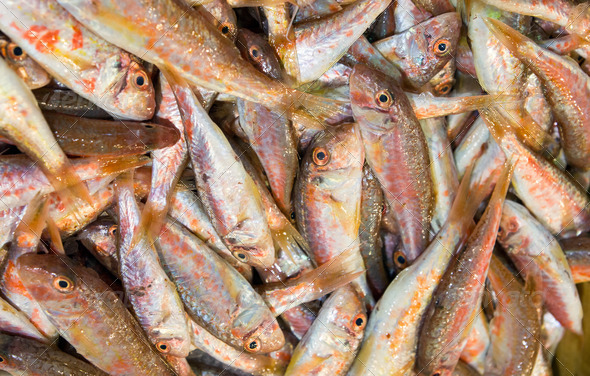 Red mullet fish - Stock Photo - Images