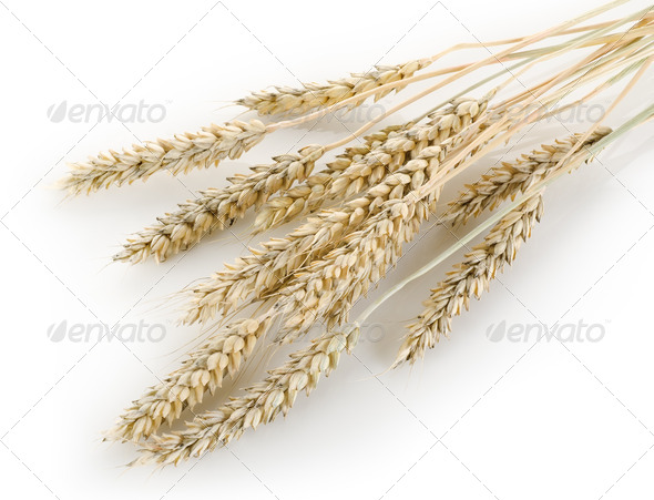 Stalks of wheat - Stock Photo - Images