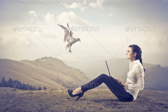 Bird in a Wasteland - Stock Photo - Images