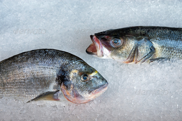 Fresh fish on ice  - Stock Photo - Images