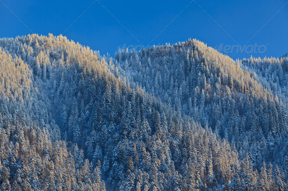 winter forest  - Stock Photo - Images