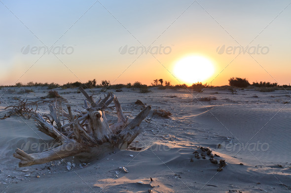 wild beach - Stock Photo - Images