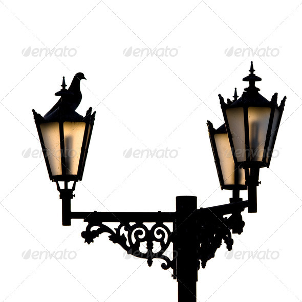Lamps and assidenous pigeon. - Stock Photo - Images