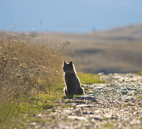 Grey cat by road - Stock Photo - Images
