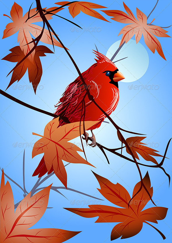 The  Northern Cardinal Sitting on a Maple Branch - Animals Characters