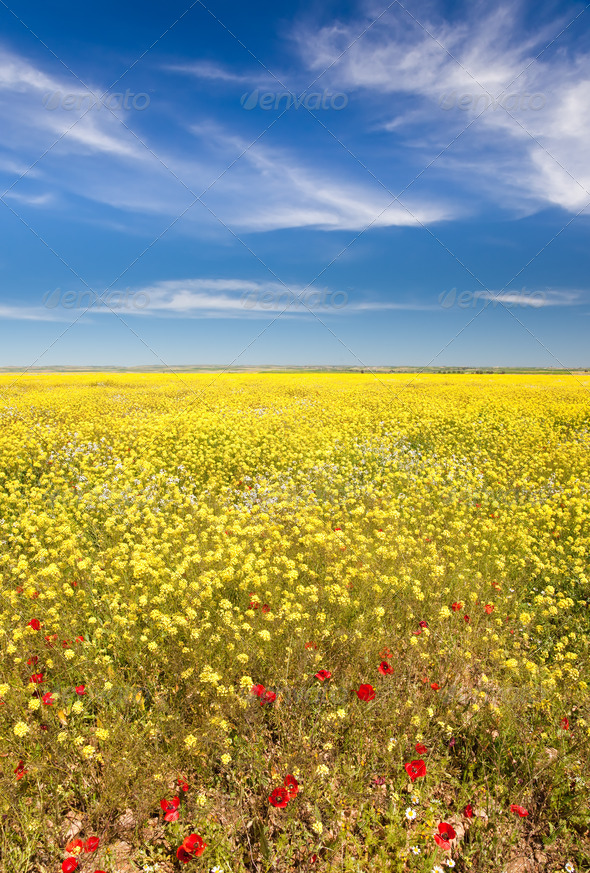 Spring field in bloom - Stock Photo - Images