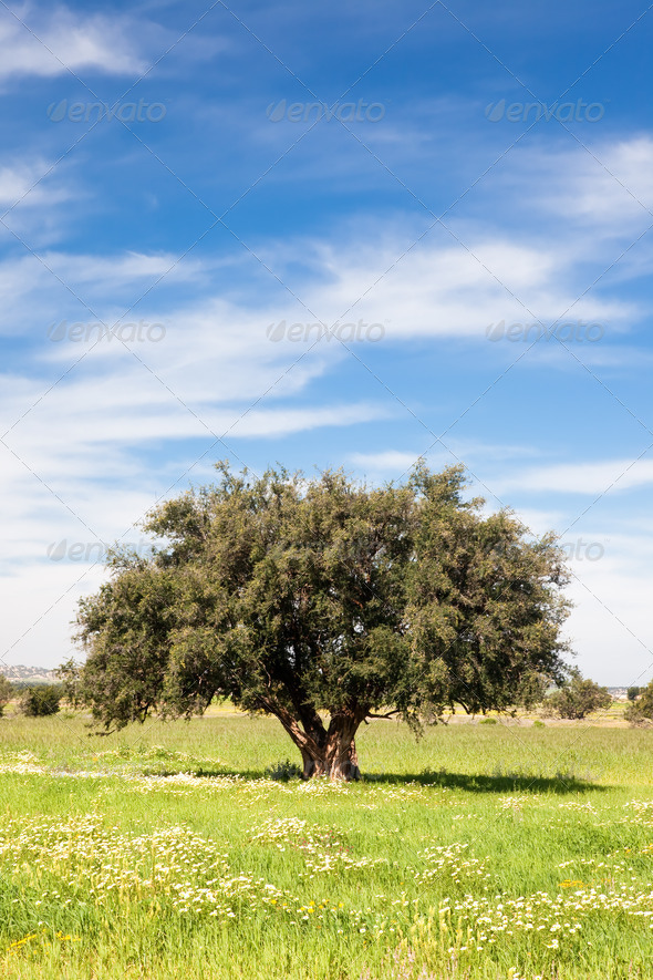 Lonely tree in a green field - Stock Photo - Images