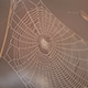 Spider Net - VideoHive Item for Sale